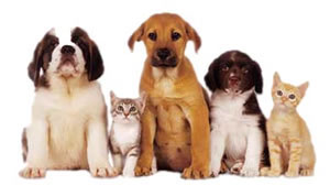 Carpet Service Express Pet Odor Removal